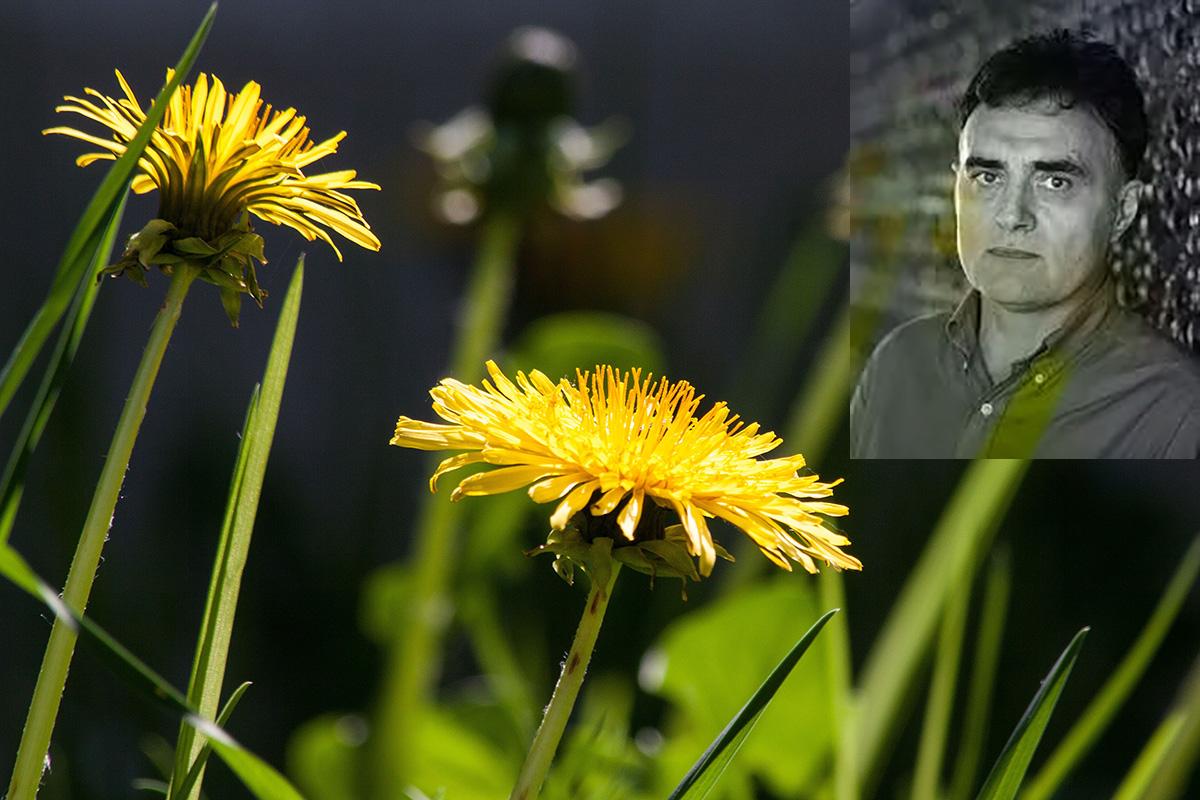The season of the dandelions by blaze minevski modern for Immagini di blaze